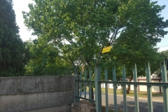 electrical installations fence are situated in Marie street New Estates Springs002